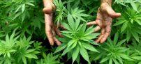 Despenalización de la mariguana