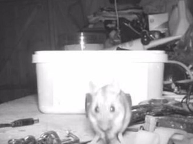 Un jubilado descubrió que un roedor ordenaba su casa