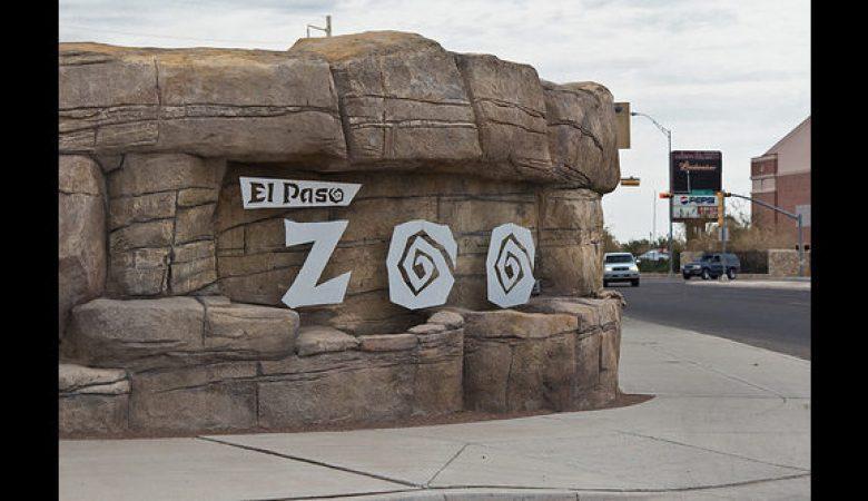 El zoológico de El Paso reabrirá sus puertas, tras casi un año de estar cerrado por la pandemia de Covid-19
