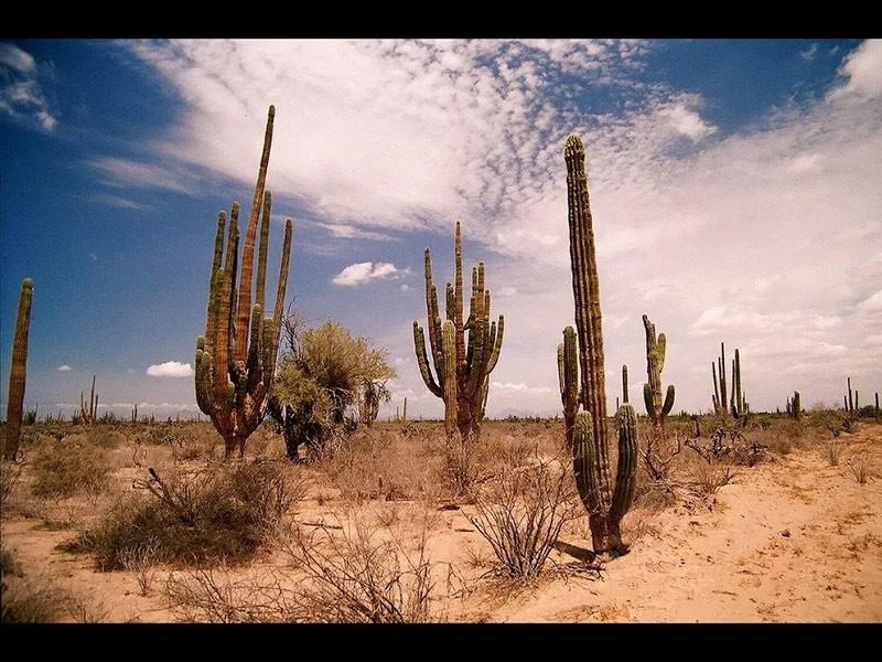 Un paraje del desierto de Sonora