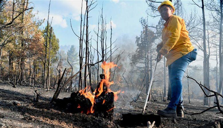 Incendios en la Sierra de Chihuahua