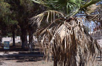 Sequía en Ciudad Juárez