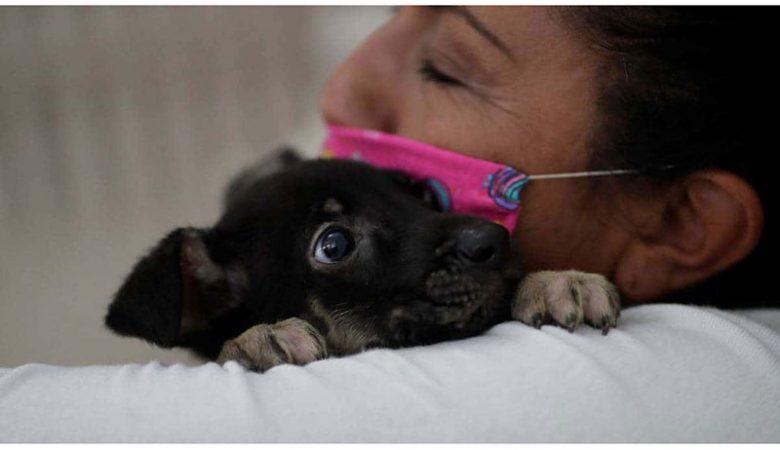 mascotas; contagiar